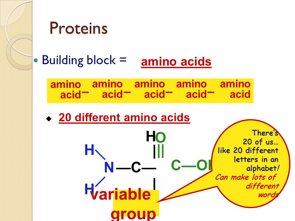 Proteins Function: ◦ many, many functions  hormones  signals from one body system to another  insulin  movement  muscle  immune system  protect