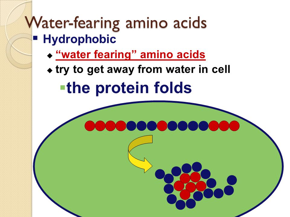 """Amino acid chains Proteins ◦ amino acids chained into a polymer  Each amino acid is different  some """"like"""" water & dissolve in it  some """"fear"""" wate"""