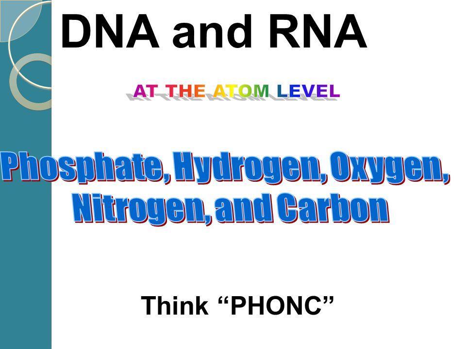 Nucleic acids phosphate sugar N base