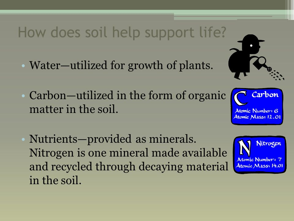 How does soil help support life. Water—utilized for growth of plants.