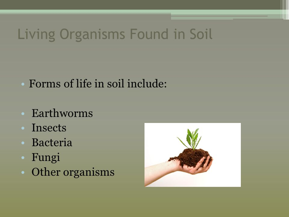 Living Organisms Found in Soil Forms of life in soil include: Earthworms Insects Bacteria Fungi Other organisms