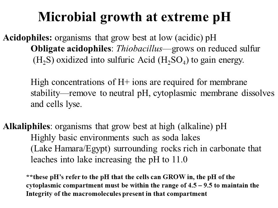 Microbial growth at extreme pH Acidophiles: organisms that grow best at low (acidic) pH Obligate acidophiles: Thiobacillus—grows on reduced sulfur (H