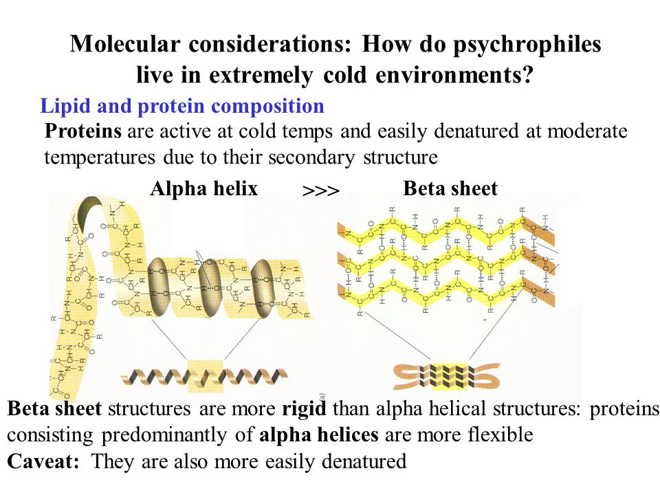 Molecular considerations: How do psychrophiles live in extremely cold environments.