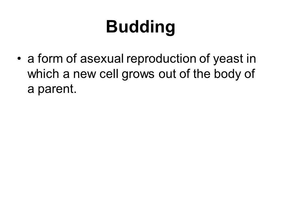 Budding a form of asexual reproduction of yeast in which a new cell grows out of the body of a parent.