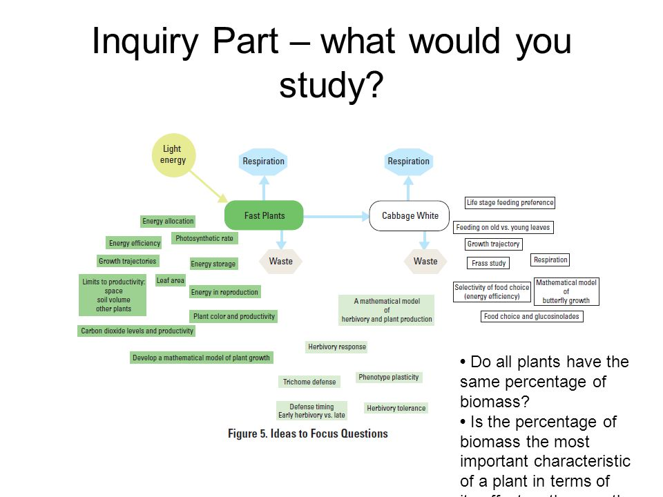 Inquiry Part – what would you study.Do all plants have the same percentage of biomass.