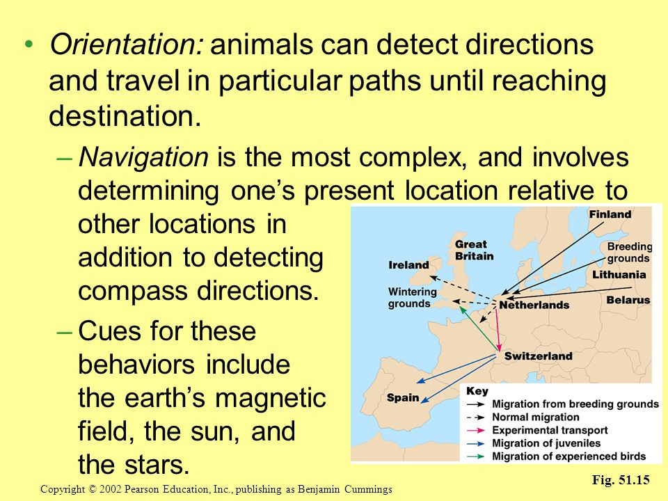 Orientation: animals can detect directions and travel in particular paths until reaching destination.