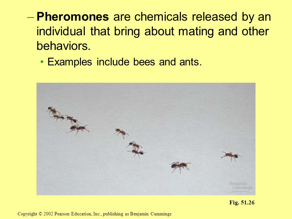 –Pheromones are chemicals released by an individual that bring about mating and other behaviors.