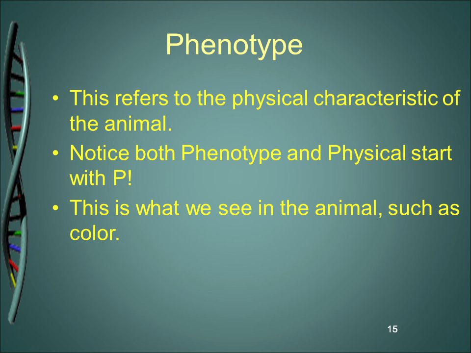 15 Phenotype This refers to the physical characteristic of the animal. Notice both Phenotype and Physical start with P! This is what we see in the ani