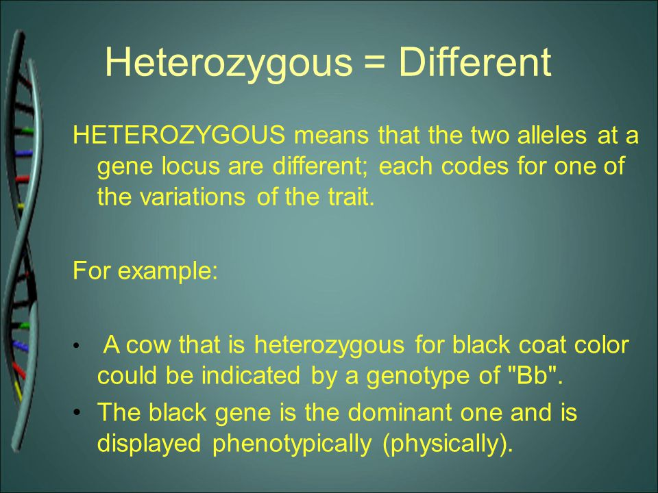 Heterozygous = Different HETEROZYGOUS means that the two alleles at a gene locus are different; each codes for one of the variations of the trait. For
