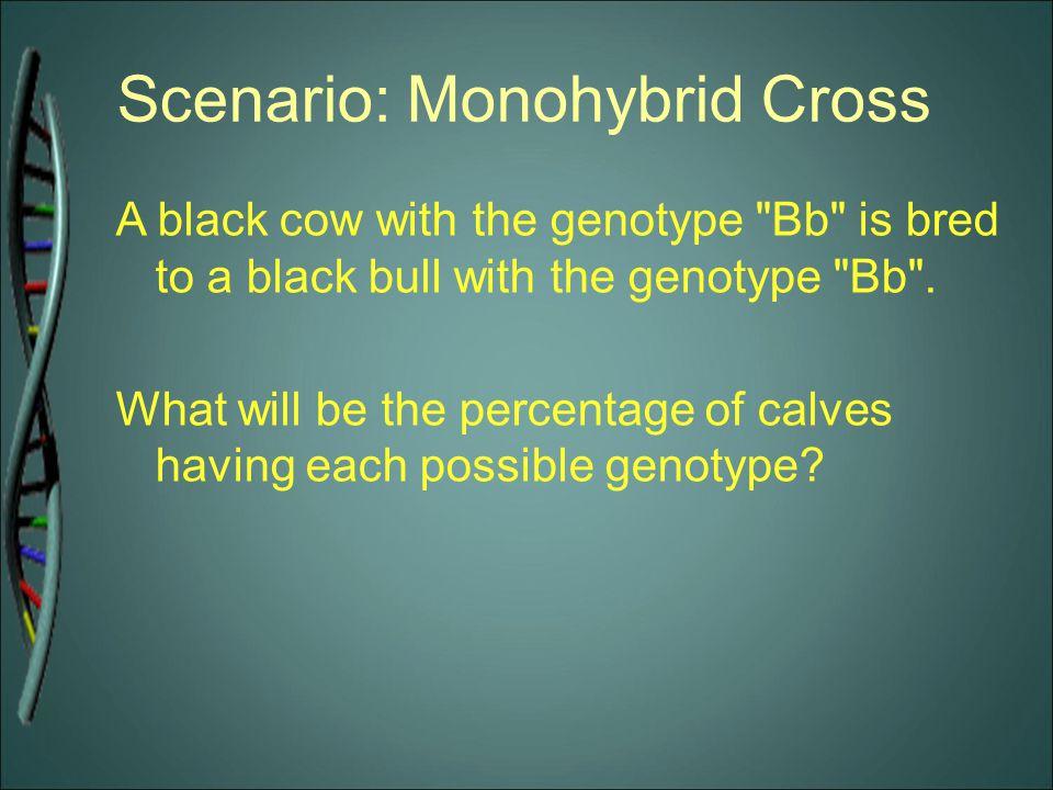 Scenario: Monohybrid Cross A black cow with the genotype