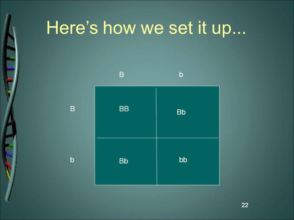 22 Here's how we set it up... 22 B B b b BB bb Bb