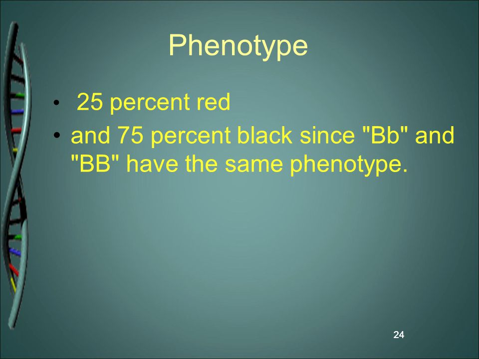 24 Phenotype 25 percent red and 75 percent black since