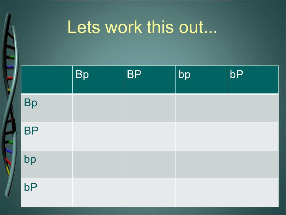 Lets work this out... BpBPbpbP Bp BP bp bP