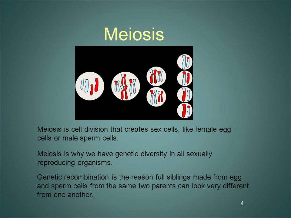 Meiosis 4 Meiosis is cell division that creates sex cells, like female egg cells or male sperm cells. Meiosis is why we have genetic diversity in all