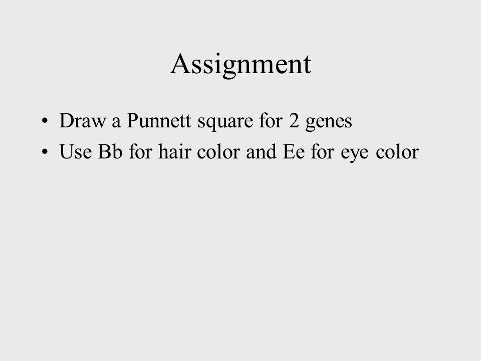 Assignment Draw a Punnett square for 2 genes Use Bb for hair color and Ee for eye color