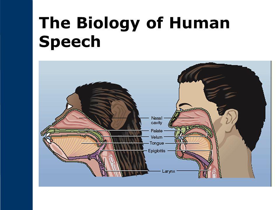 The Biology of Human Speech