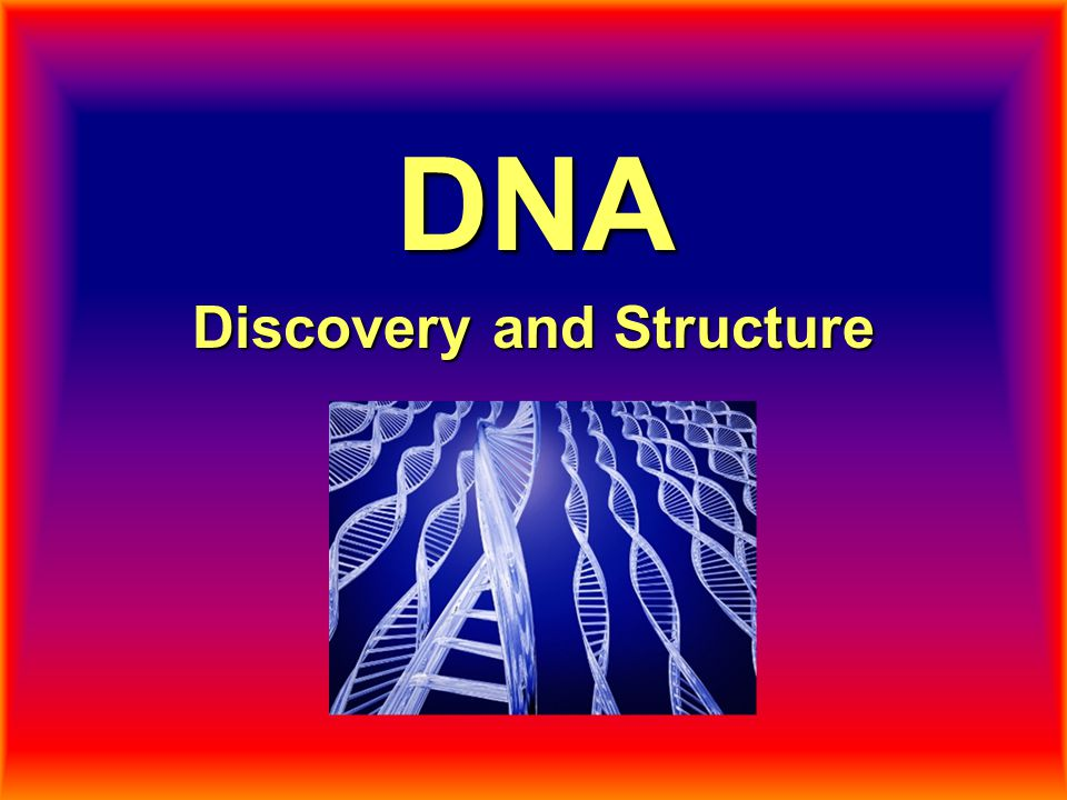What is DNA's Structure.DNA is a biological polymer made up of subunits called nucleotides.