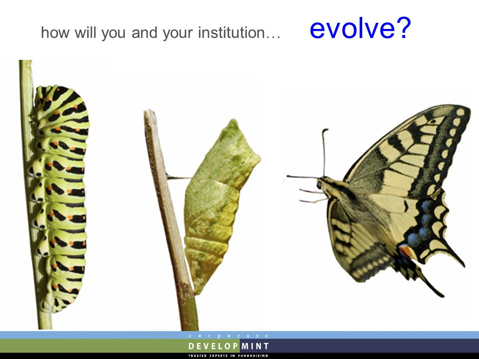 how will you and your institution … evolve?