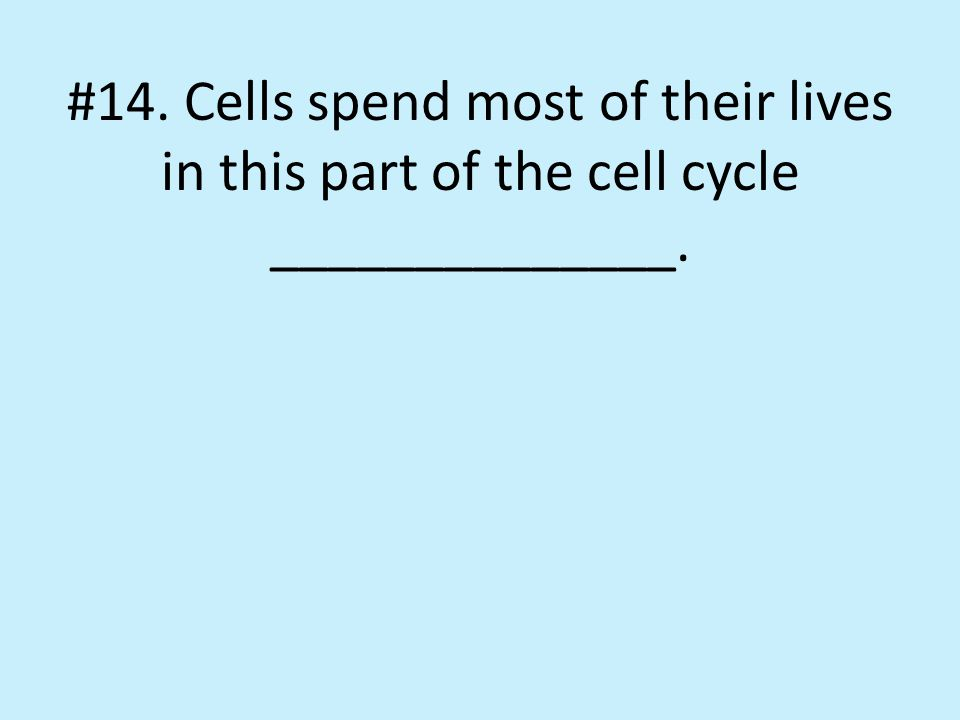 #14. Cells spend most of their lives in this part of the cell cycle ______________.