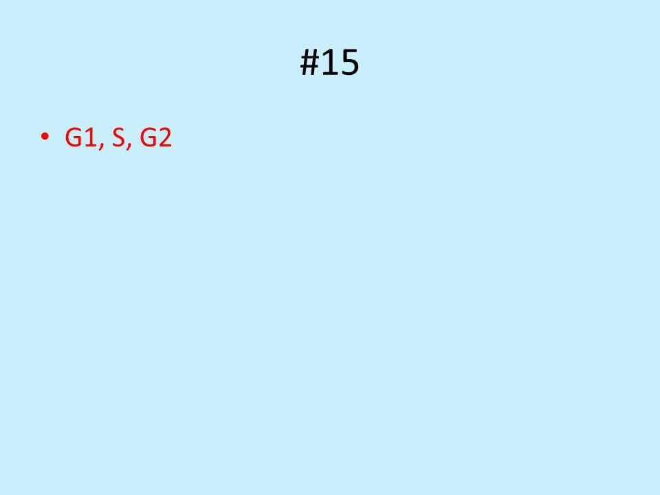 #15 G1, S, G2