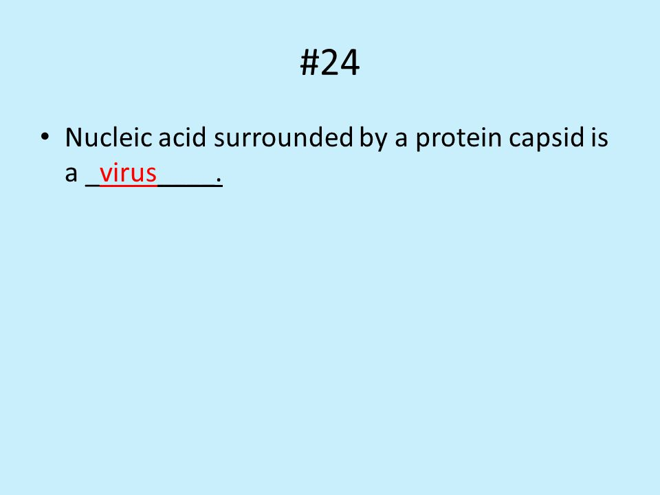 #24 Nucleic acid surrounded by a protein capsid is a _virus____.