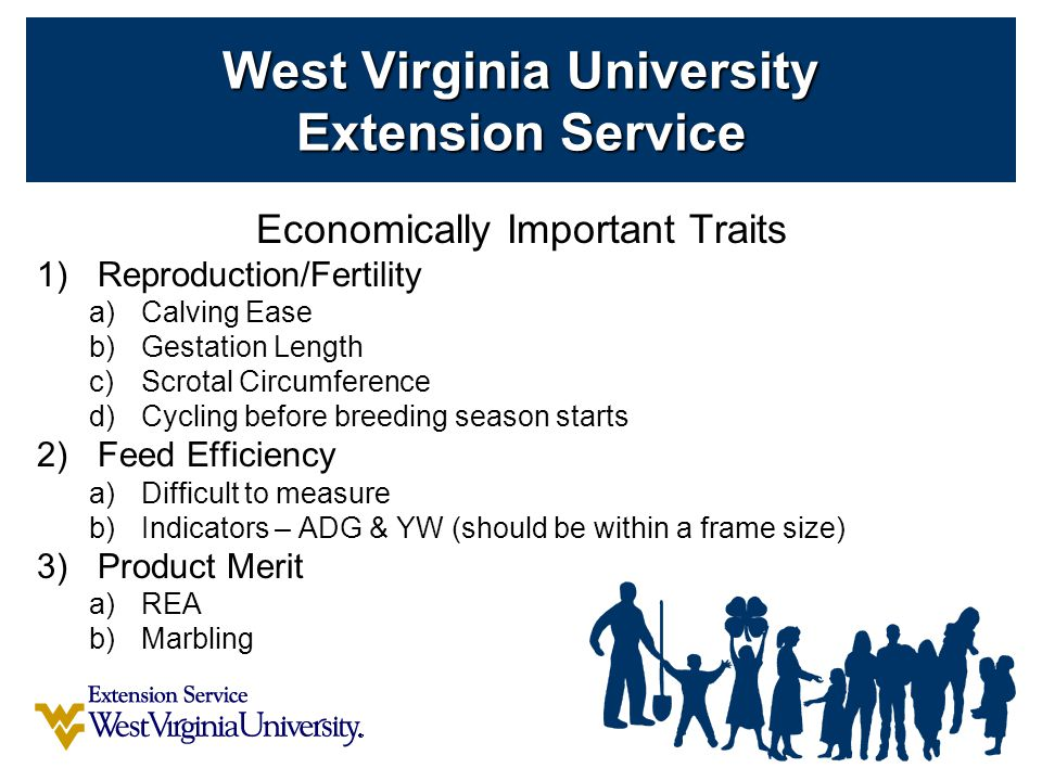 Economically Important Traits 1)Reproduction/Fertility a)Calving Ease b)Gestation Length c)Scrotal Circumference d)Cycling before breeding season starts 2)Feed Efficiency a)Difficult to measure b)Indicators – ADG & YW (should be within a frame size) 3)Product Merit a)REA b)Marbling West Virginia University Extension Service