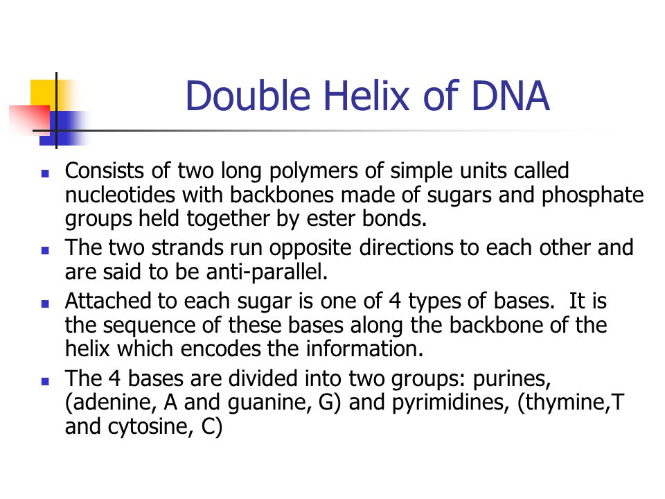 Double Helix of DNA Consists of two long polymers of simple units called nucleotides with backbones made of sugars and phosphate groups held together