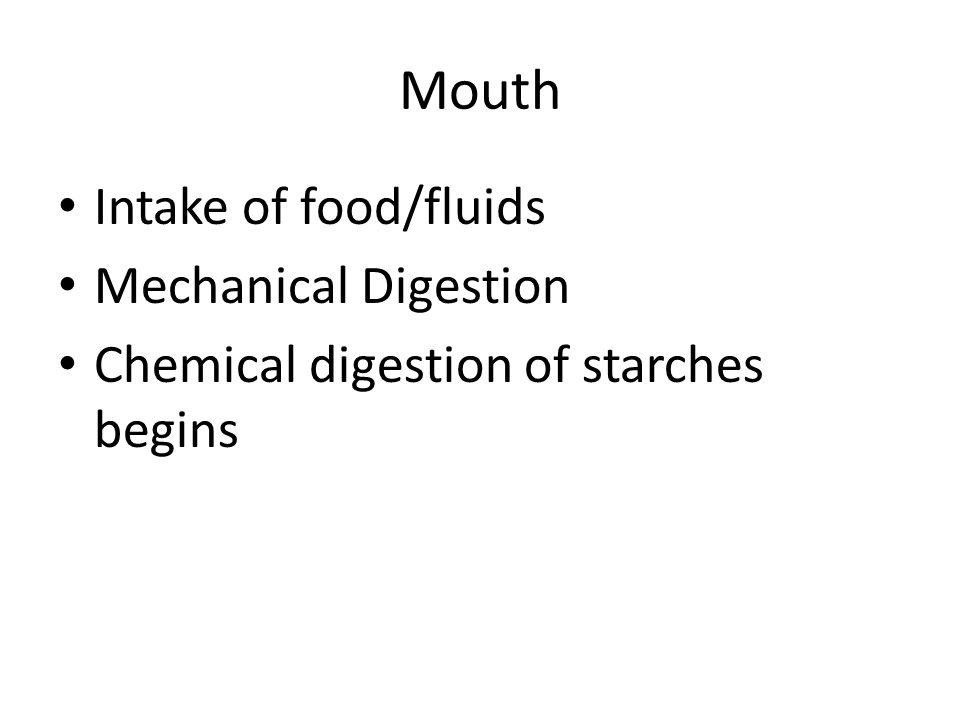 Intake of food/fluids Mechanical Digestion Chemical digestion of starches begins Mouth