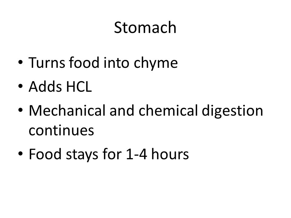 Turns food into chyme Adds HCL Mechanical and chemical digestion continues Food stays for 1-4 hours Stomach