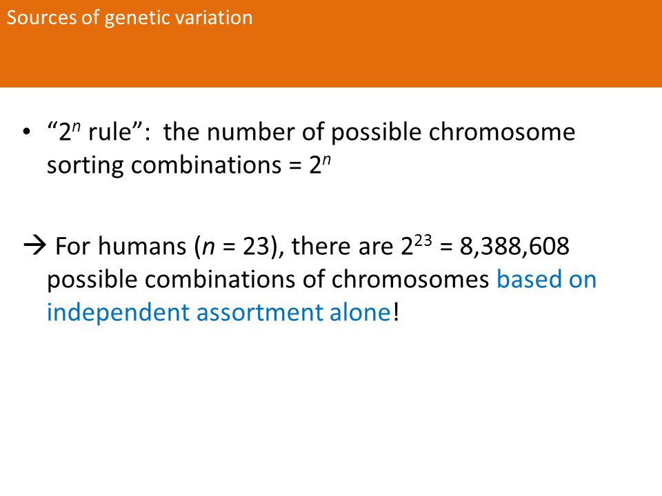 2 n rule : the number of possible chromosome sorting combinations = 2 n  For humans (n = 23), there are 2 23 = 8,388,608 possible combinations of chromosomes based on independent assortment alone.