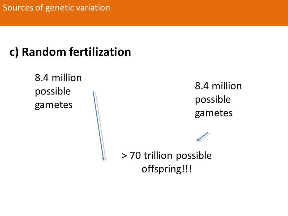 c) Random fertilization Sources of genetic variation 8.4 million possible gametes > 70 trillion possible offspring!!!