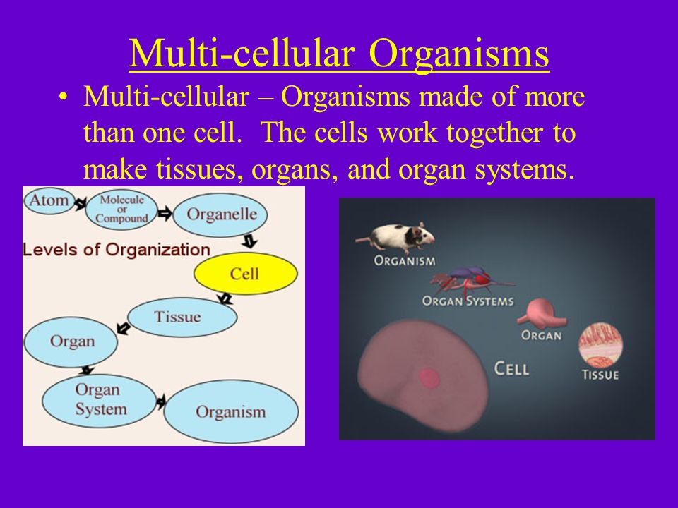 Unicellular vs.Multicellular Similar 1.Carry on all 7 characteristics of life.