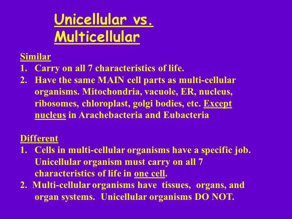 Unicellular vs. Multicellular Similar 1.Carry on all 7 characteristics of life. 2.Have the same MAIN cell parts as multi-cellular organisms. Mitochond