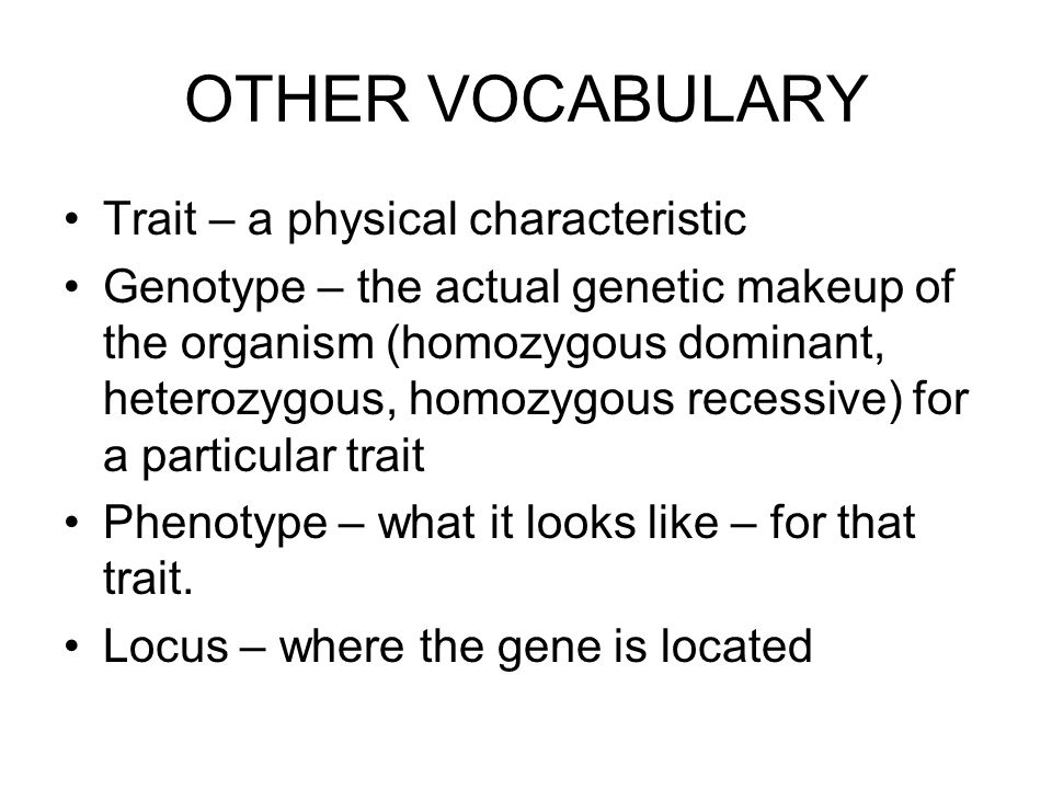OTHER VOCABULARY Trait – a physical characteristic Genotype – the actual genetic makeup of the organism (homozygous dominant, heterozygous, homozygous recessive) for a particular trait Phenotype – what it looks like – for that trait.
