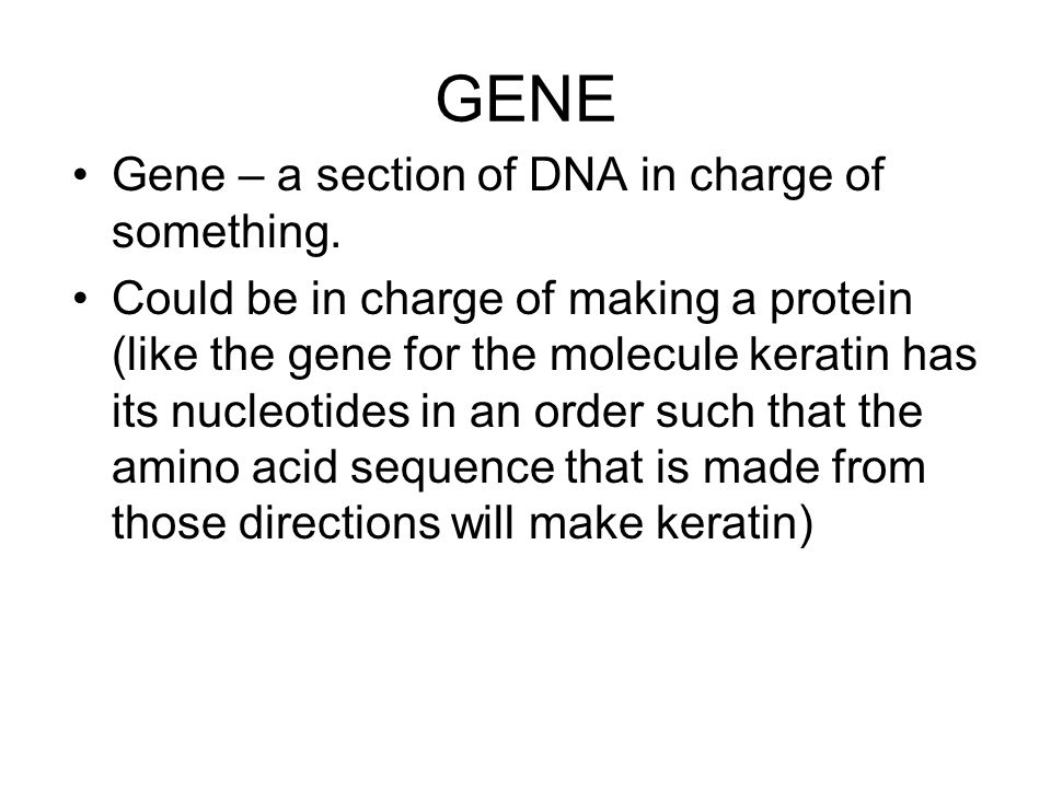 GENE Gene – a section of DNA in charge of something.