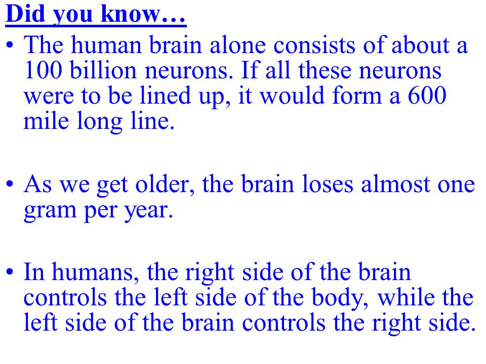 Did you know… The human brain alone consists of about a 100 billion neurons.