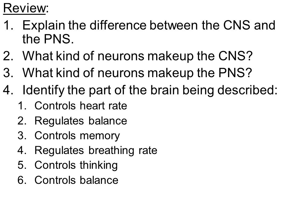 Review: 1.Explain the difference between the CNS and the PNS.