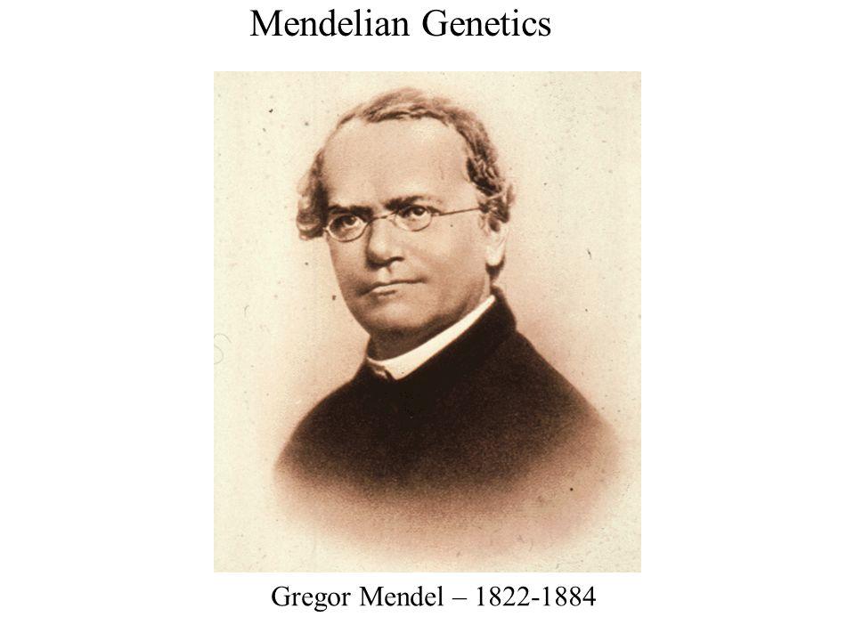 Gregor Mendel – 1822-1884 Mendelian Genetics