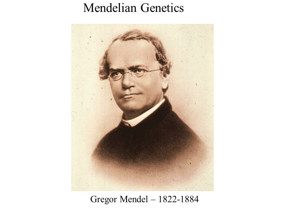Law of Segregation P Generation Appearance: Genetic makeup: Gametes: Purple flowers White flowers PP pp P p