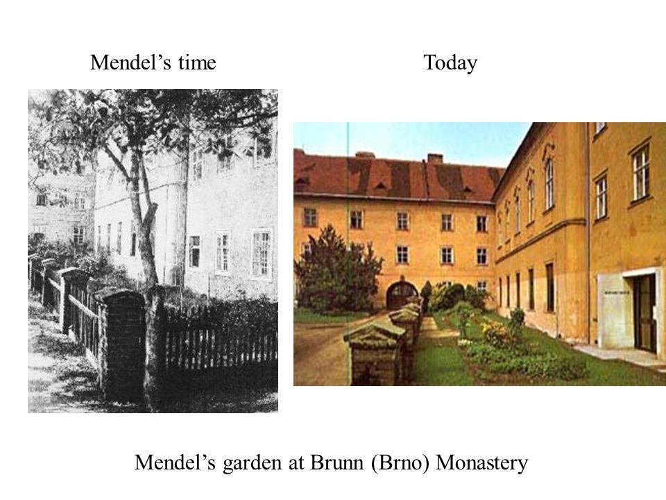 Mendel's garden at Brunn (Brno) Monastery Mendel's timeToday