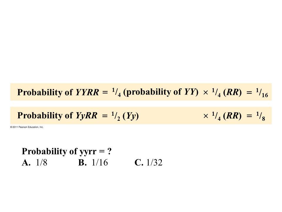Probability of YYRR Probability of YyRR 1 / 4 (probability of YY) 1 / 2 (Yy) 1 / 4 (RR) 1 / 16 1/81/8       Probability of yyrr = ? A. 1/8B. 1/1