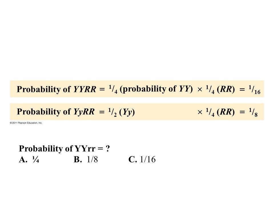 Probability of YYRR Probability of YyRR 1 / 4 (probability of YY) 1 / 2 (Yy) 1 / 4 (RR) 1 / 16 1/81/8       Probability of YYrr = ? A. ¼B. 1/8C.