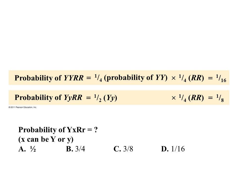 Probability of YYRR Probability of YyRR 1 / 4 (probability of YY) 1 / 2 (Yy) 1 / 4 (RR) 1 / 16 1/81/8       Probability of YxRr = ? (x can be Y