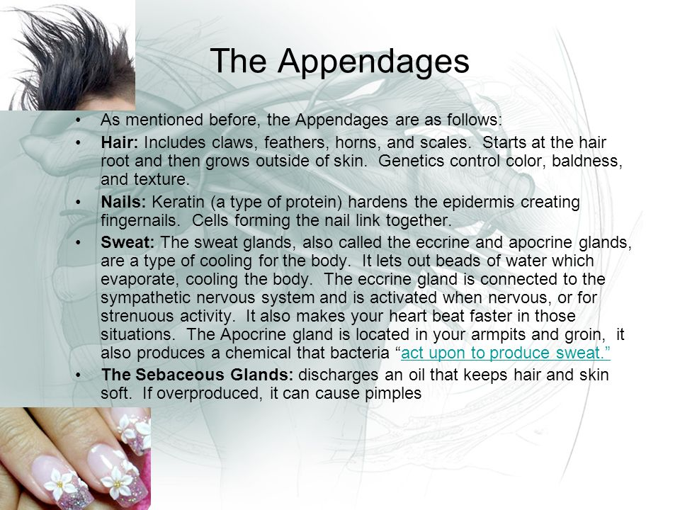 The Appendages As mentioned before, the Appendages are as follows: Hair: Includes claws, feathers, horns, and scales.