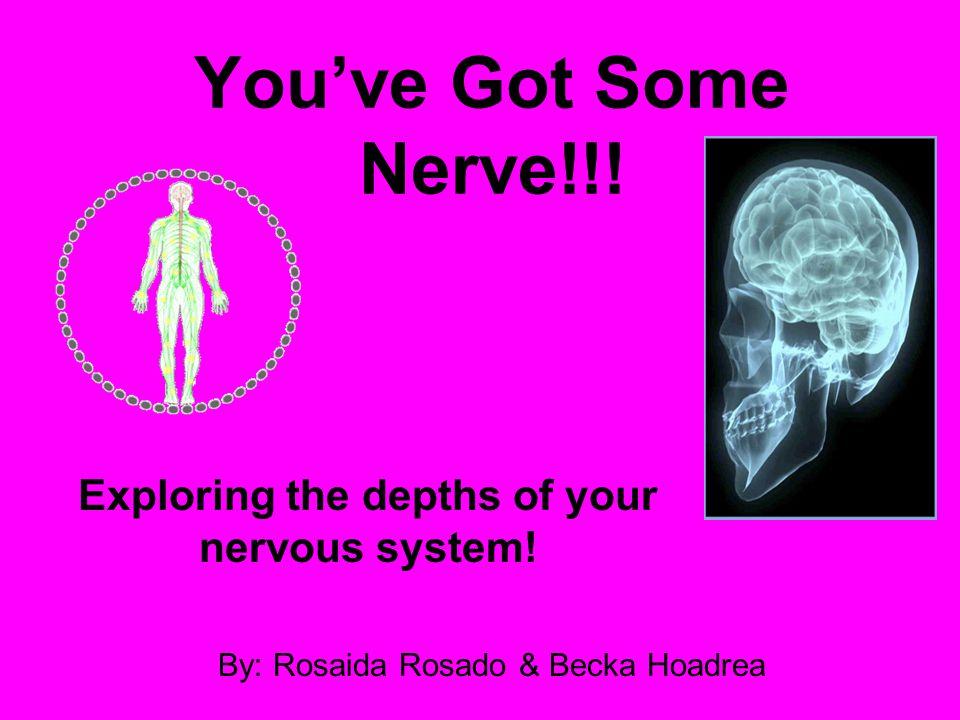 You've Got Some Nerve!!! Exploring the depths of your nervous system! By: Rosaida Rosado & Becka Hoadrea
