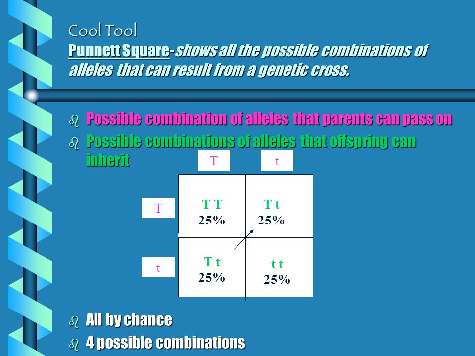 Cool Tool Punnett Square-shows all the possible combinations of alleles that can result from a genetic cross.