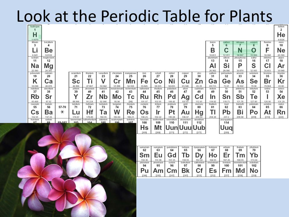 Look at the Periodic Table for Plants