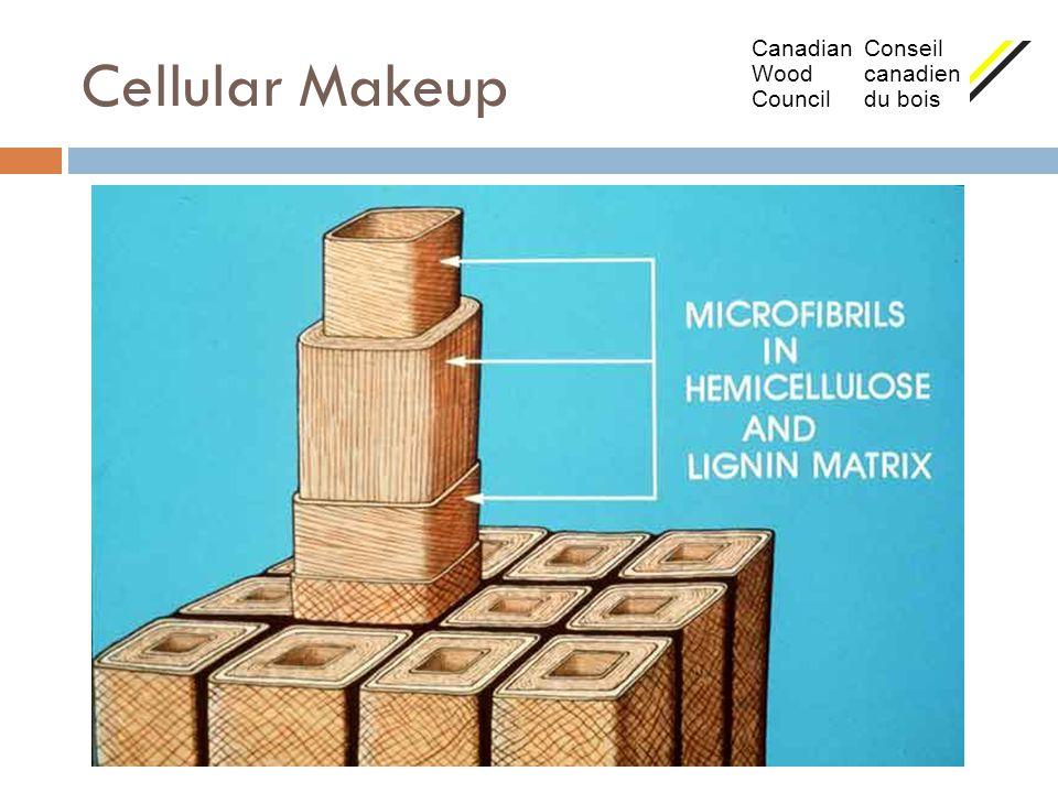 Cellular Makeup Canadian Conseil Wood canadien Council du bois