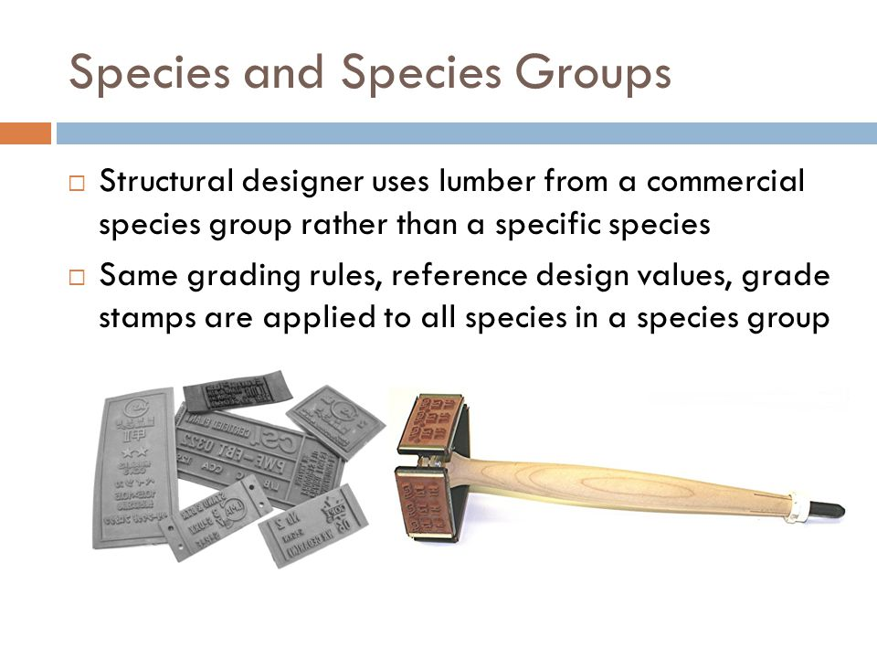 Species and Species Groups  Structural designer uses lumber from a commercial species group rather than a specific species  Same grading rules, refe