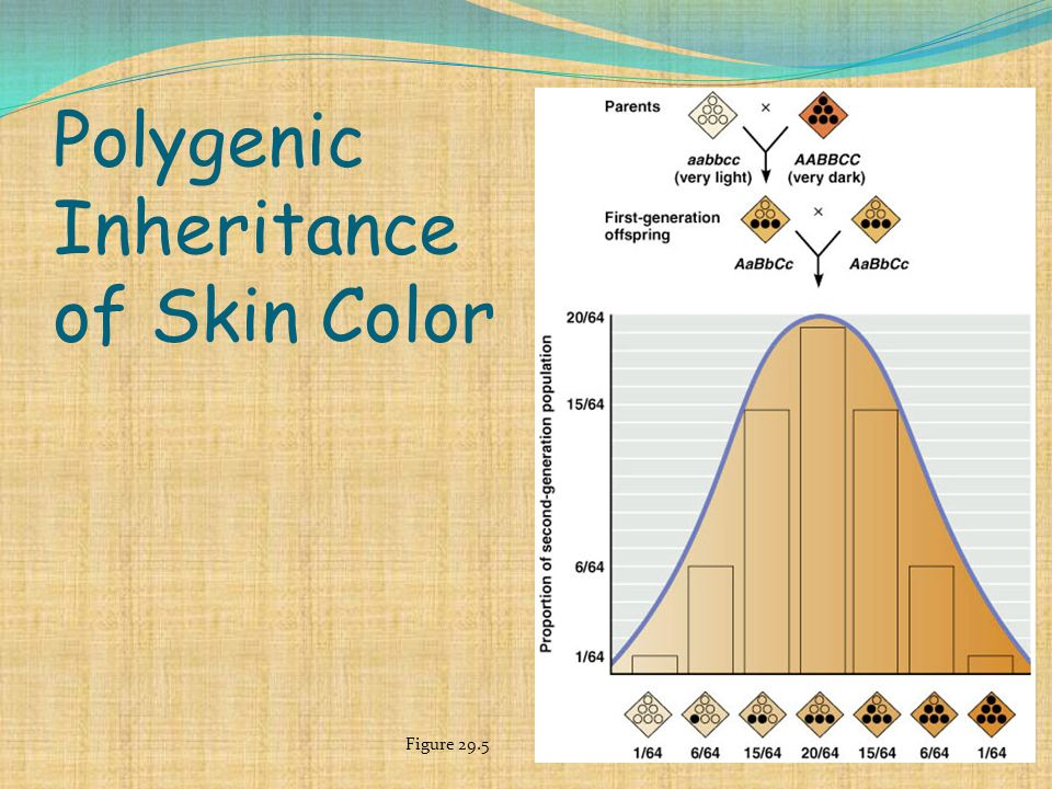 Polygenic Inheritance of Skin Color Figure 29.5